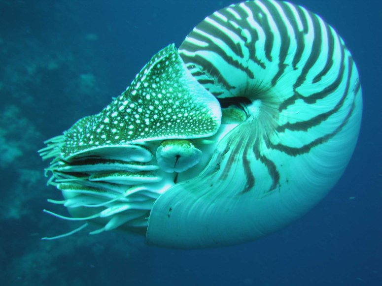 Nautilus_side