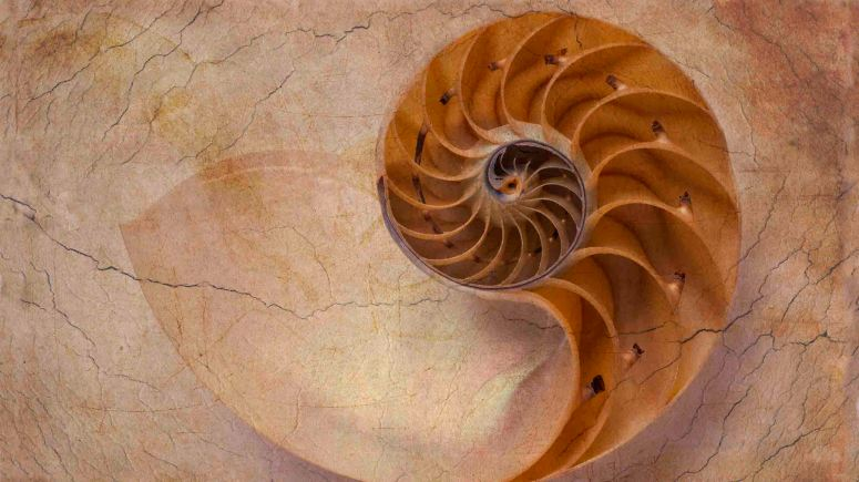 Earthy Nautilus Shell